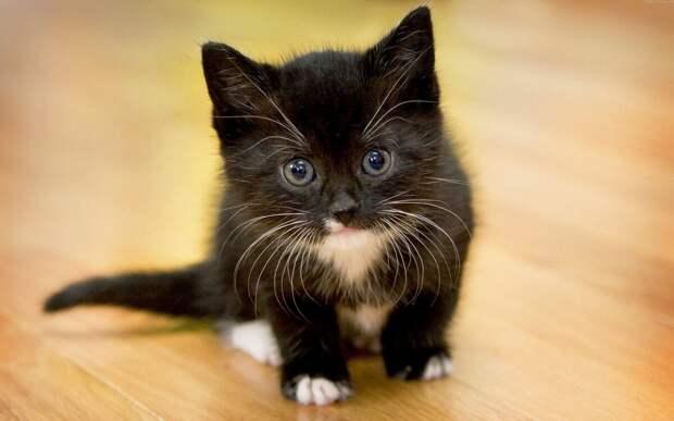 "Почему кошки ""не любят"" свои имена?"