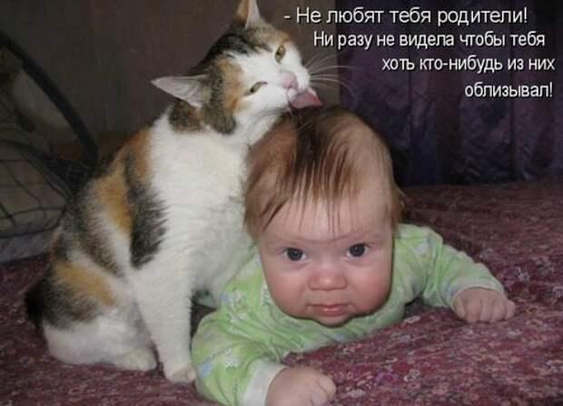 Веселые истории про кошек и котов