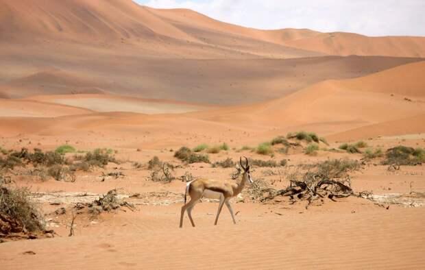 Пустыни и дикая природа – всё, что здесь есть. Фото: Gregory Brown