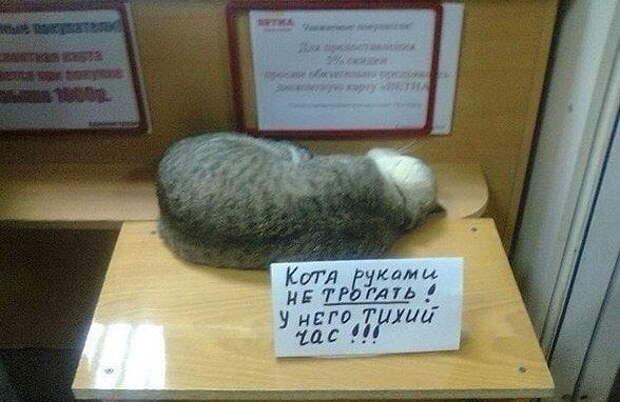 Невозможно не любить котов (12 фото)