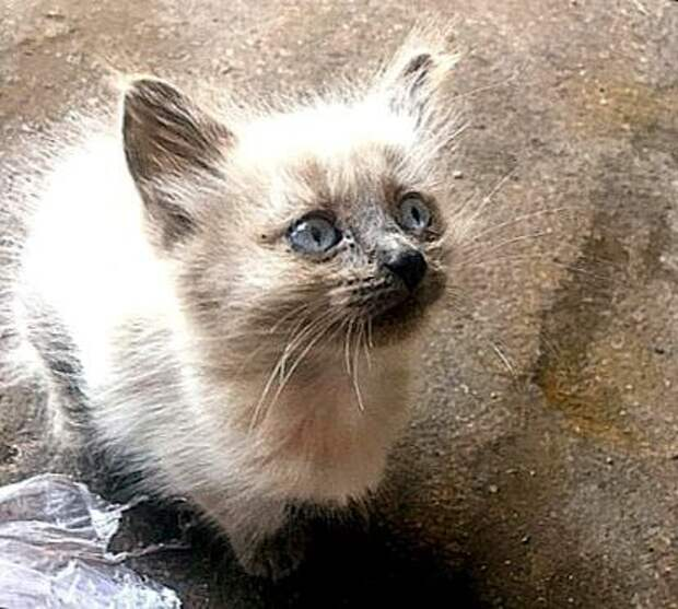 На лестничной клетке плакал котёнок. Но взять его я не могла