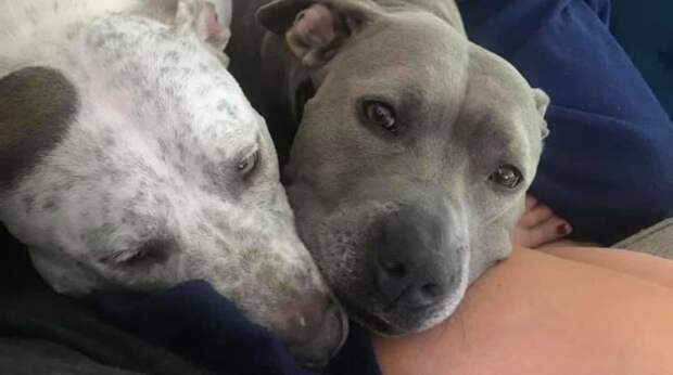 """Лучшее место в мире — рядом с мамой! Две собаки устроили """"войнушки"""" за мягкий диван"""