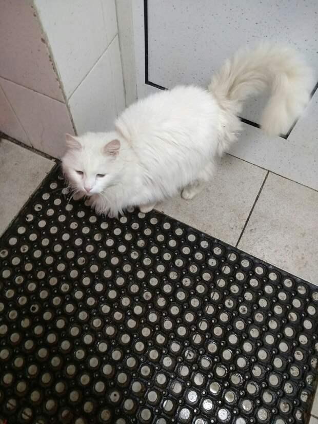 Что может быть важнее, когда котишка так ОТЧАЯННО просит помощи?!!