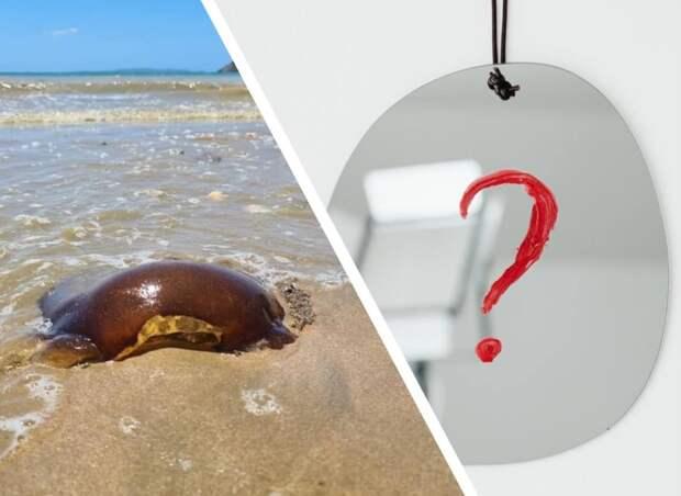 Томатная медуза или дьявольский кошелек? В сети пытаются разгадать эту загадку