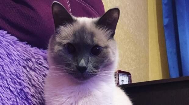 Супруги приютили бездомную кошку, а та стала стремительно толстеть. Люди радовались, что откормили МУРлыку, а зря…
