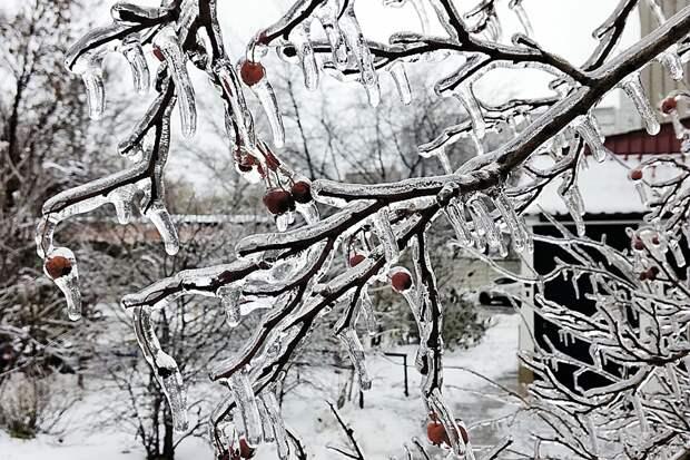 Заледеневшие ветви могут не выдержать тяжести снега, поэтому его нужно стряхнуть.