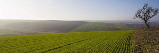 Земля - одна из популярнейших форм владения богатством
