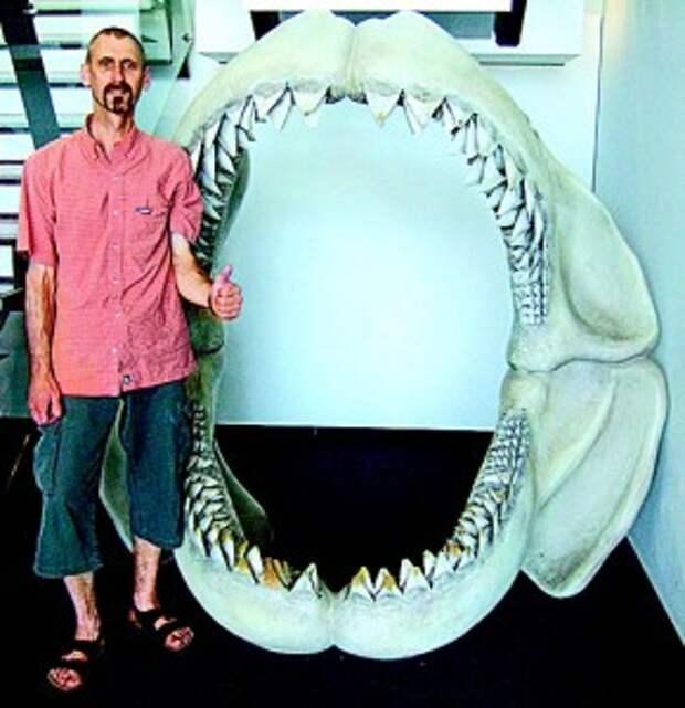 Челюсти мегалодона – гигантской рыбы, вымершей 1,5 миллиона лет назад