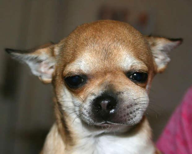 Смешные собаки, которые усвоили урок: пчелы вот совсем несъедобные!