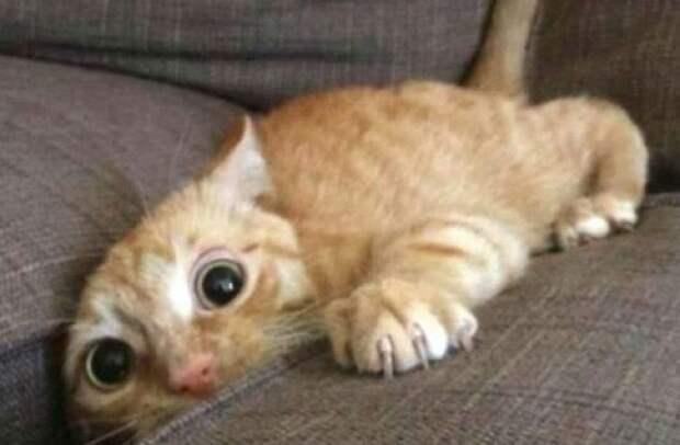 Кошки, которые заставят вас улыбнуться