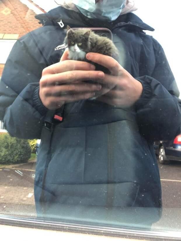 Я не держу кота в руках