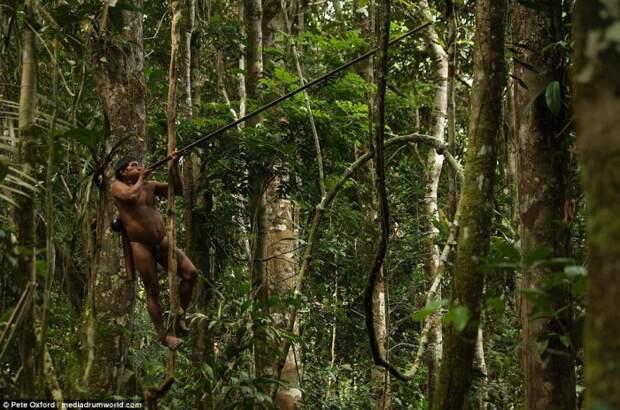 Охотник на дереве