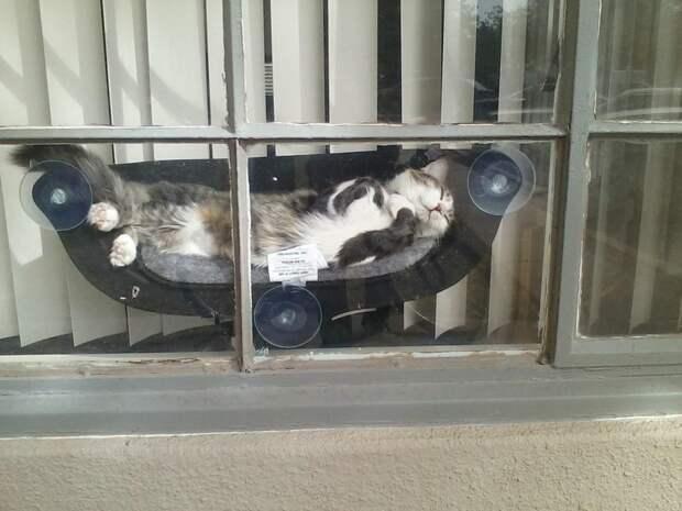 Добрых котиков вам в ленту