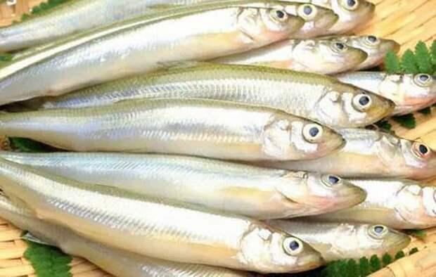 Рыбка корюшка, которая пахнет свежим огурцом или арбузом - почему и в чём дело
