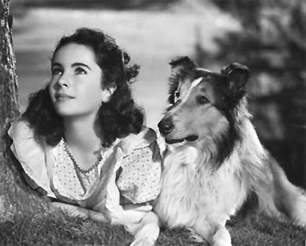 Lassie Come Home - GPS Locates Lost Pets - Bright Side Of News