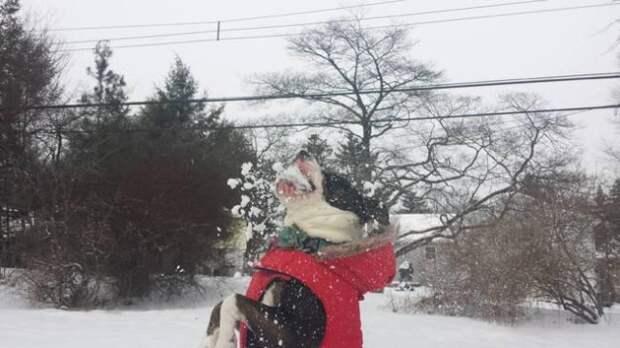Когда собаки в первый раз увидели снег