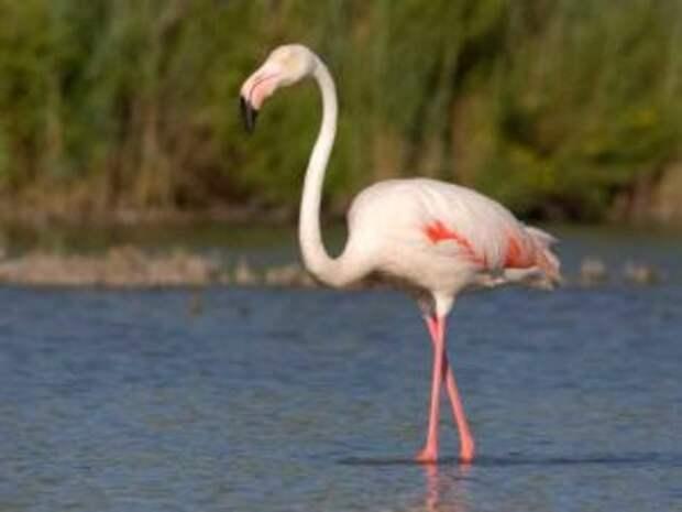 flamingo-4