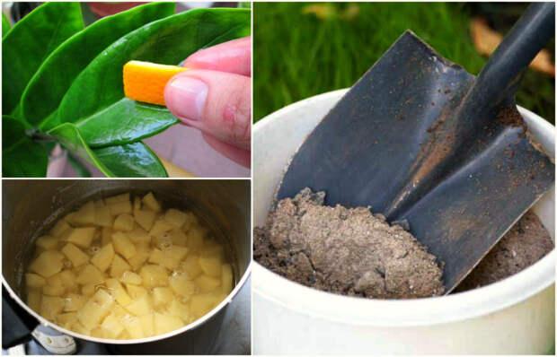14 эффективных удобрений, которые есть дома почти у каждого!
