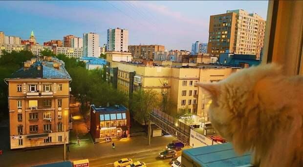Фото дня: рыжий кот наблюдал за жизнью Марьиной рощи