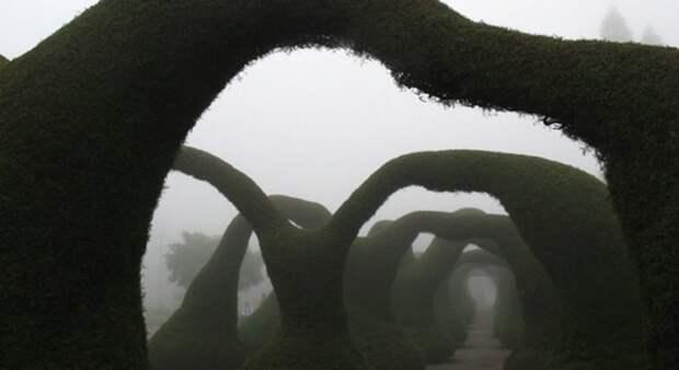 Необычные парки