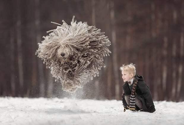 Коммодор - летающая собака дети, коммодор, собаки, фотогеничность