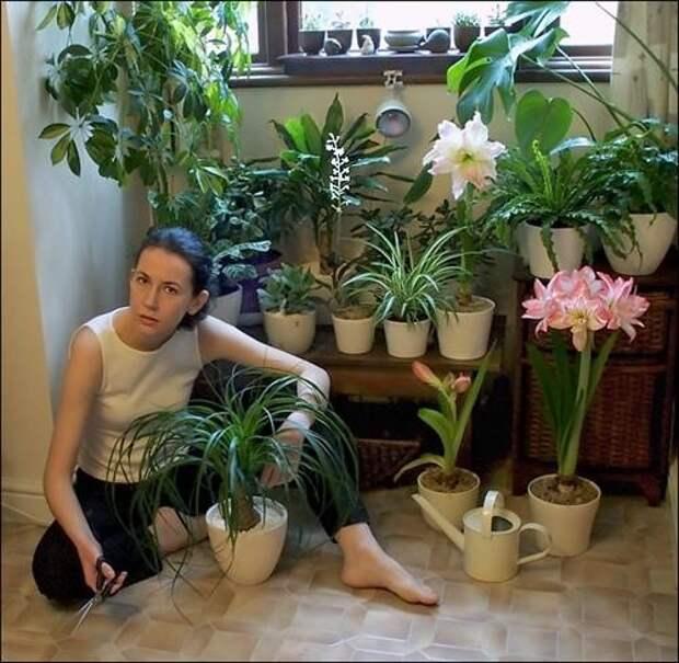 расставить цветы в квартире правильно