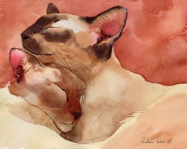 Сиамские котики. Автор: Rachel Parker.