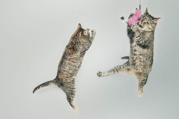 Кошки прыгают