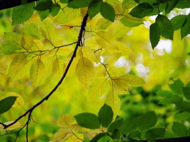 В Подмосковье объявили «желтый» уровень погодной опасности вплоть до субботы