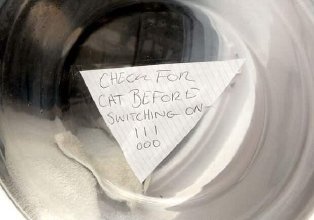 Котенок попал в стиральную машинку во время стирки, но медицинские знания хозяйки спасли ему жизнь
