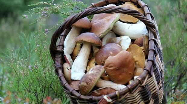 Грибникам придется заплатить штраф: 4 причины, по которым вас могут оштрафовать при сборе грибов, ягод и трав в 2021 году