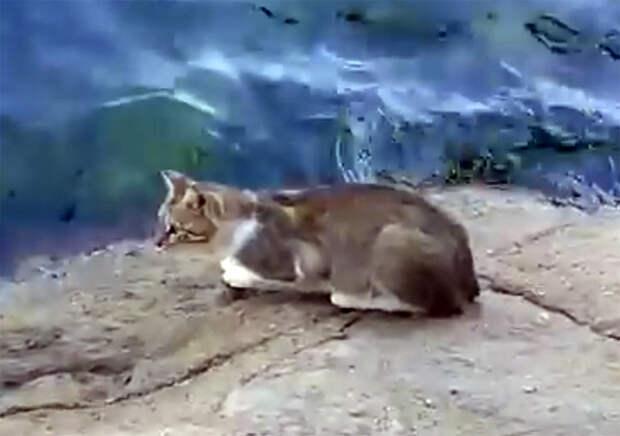 Умный кот никогда не останется голодным