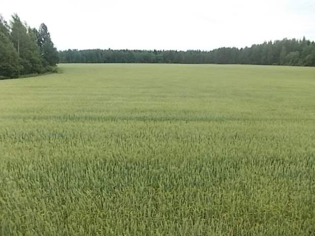 Таинственные круги нашли на поле в Краснодарском крае