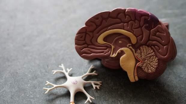 6 заблуждений о человеческом мозге