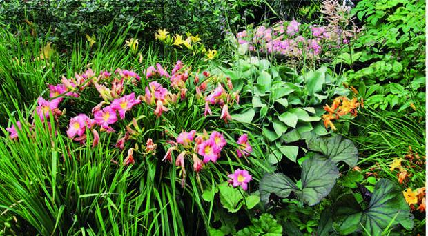 Лилейники не менее эффектны и аристократичны, чем горделивые лилии.