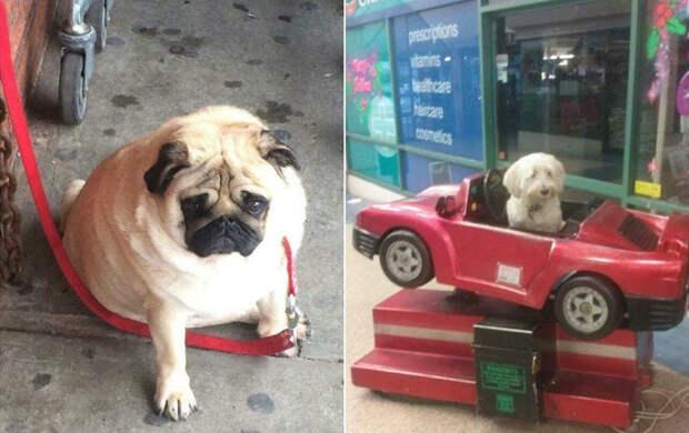 Instagram грустных собак, ждущих хозяев у магазина