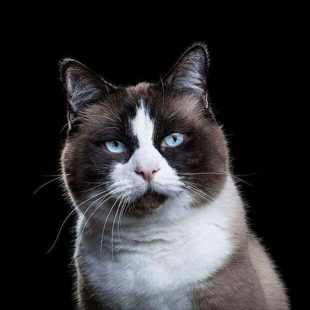 ФОТОВЫСТАВКА. Портреты животных от Robert Bahou