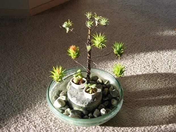 комнатные растения необычные виды