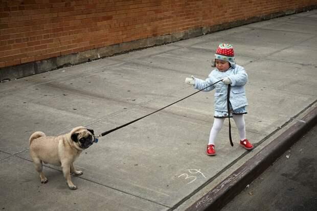 Как научить собаку слушаться: советы кинологов и секреты дрессировки