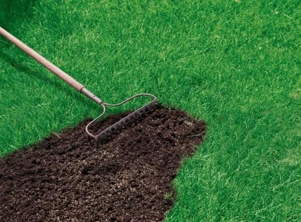 В Чуксином тупике приведут в порядок газон
