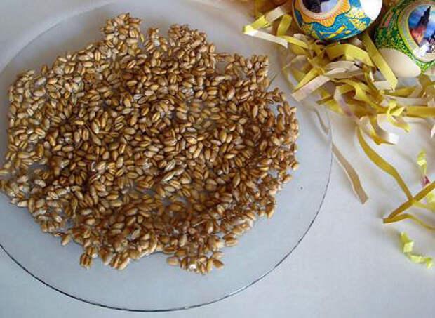 Идеи к пасхе своими руками: проращиваем зерно