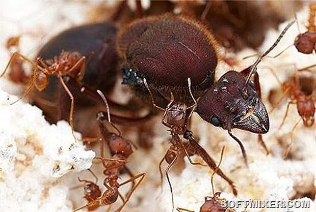 Загадки муравьиной телепортации