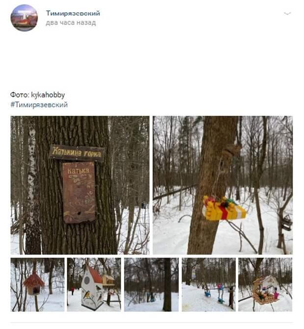 Фото дня: в Тимирязевском лесу обнаружили «Катькину горку»