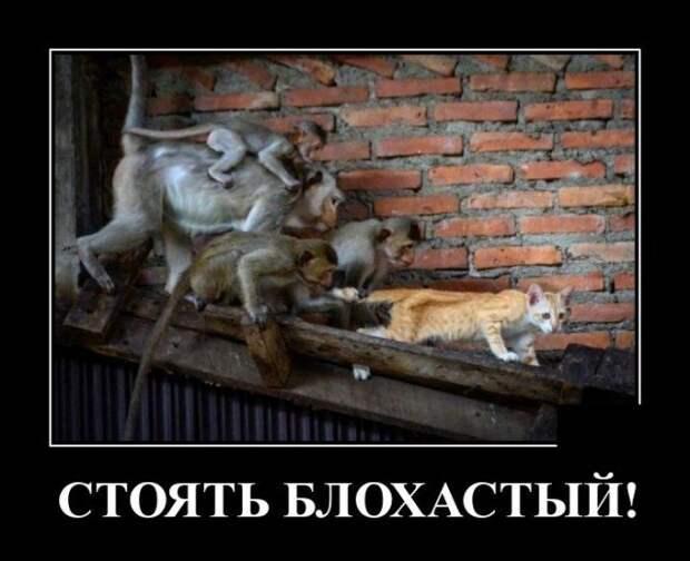 Демотиватор про кота и обезьян