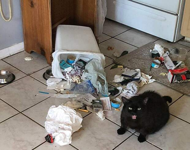 """14 котов, которых слово """"Нельзя!"""" не останавливает"""