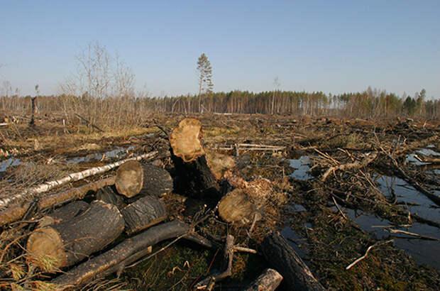 Бизнесу хотят дать три года на восстановление вырубленного леса