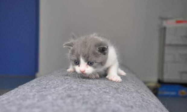 В Китае клонировали котёнка: положит ли малыш Чеснок начало прибыльному бизнесу