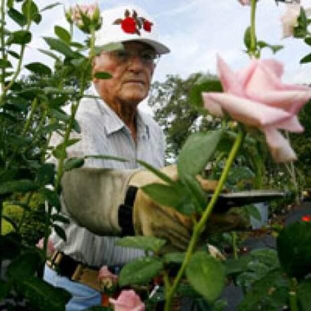 В 90 лет любить розы