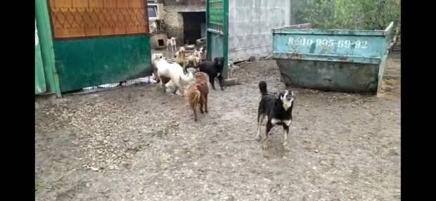 Зоозащитники: Это явно сделал человек, не боящийся собак и знающий нашу территорию