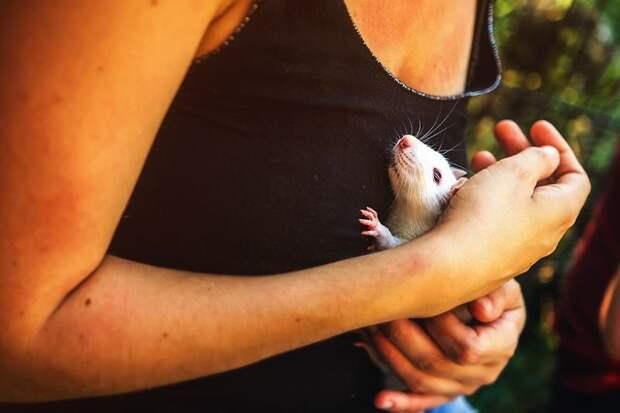 Милых грызунов впервые вынесли на природу. И они счастливы грызуны, животные, милота, природа, свобода, счастье